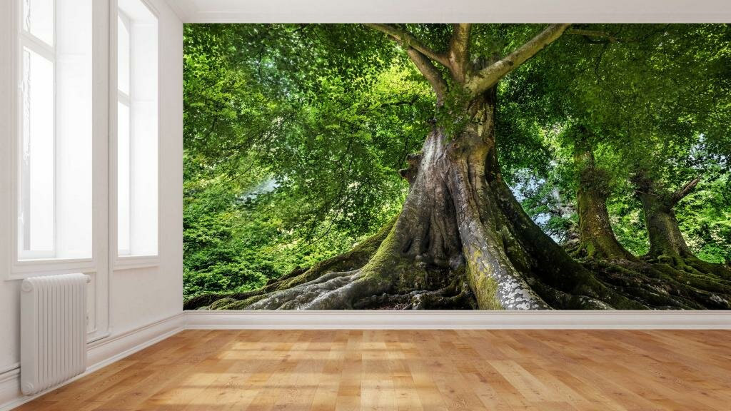 Forest Wallpaper And Wall Coverings